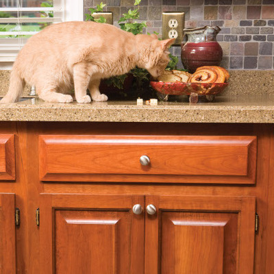 How to Keep Dogs & Cats Away From Each Other's Food | PetSafe® Articles
