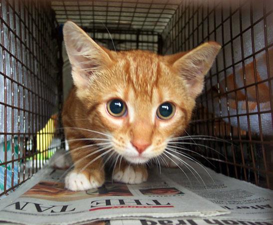 citrus essential oil cats
