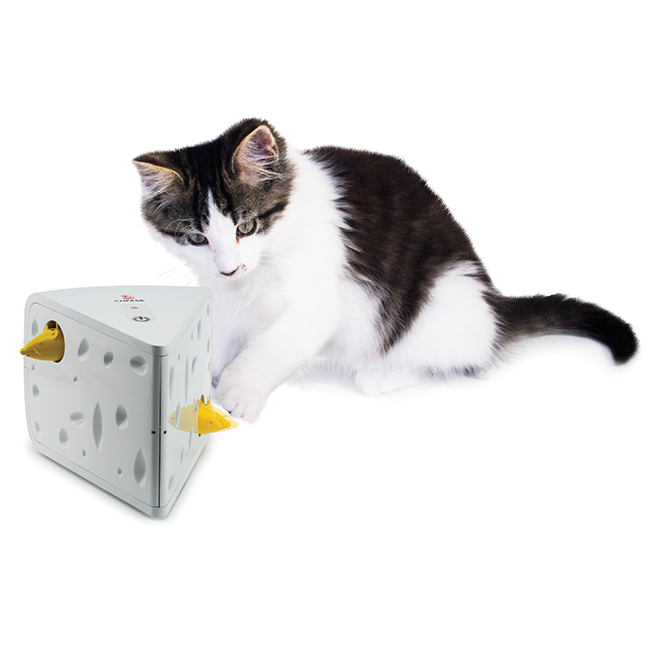 automatic cat toys