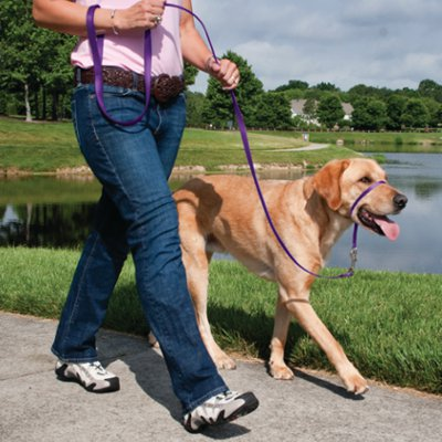 walking your dog to stop barking