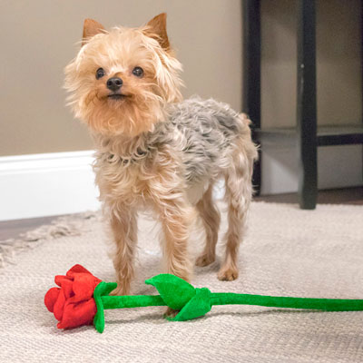 Have a Pet-Friendly Valentine's Day