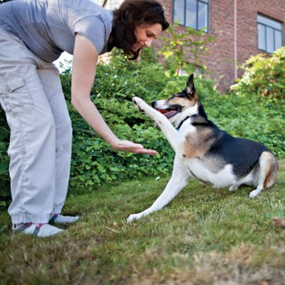How Your Dog's Personality Affects Training