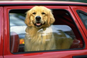 For your dog's safety, don't leave your dog in a hot car.
