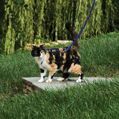Can cats be walked on a leash? (Yes, and it's not weird)