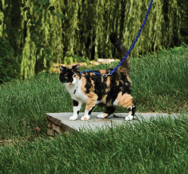 Can Cats Be Walked On A Leash Yes