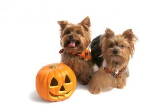 pets halloween