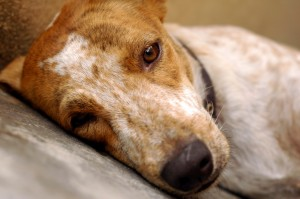 dog stress and depression