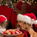 Incorporating your pets in your holiday plans can keep them out of trouble (and the cookies)!