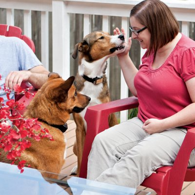 fun dog training ideas