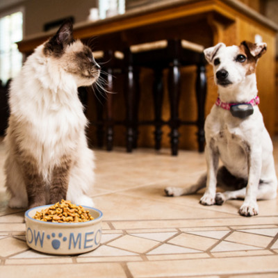 stop dog from eating cat food