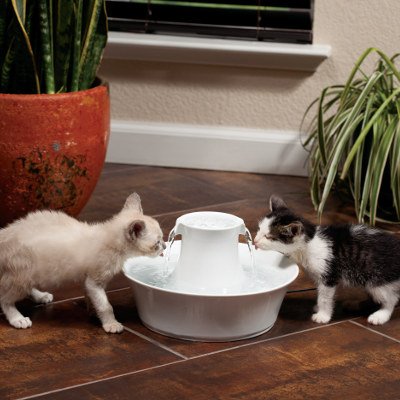 get rid of cat pee smell naturally