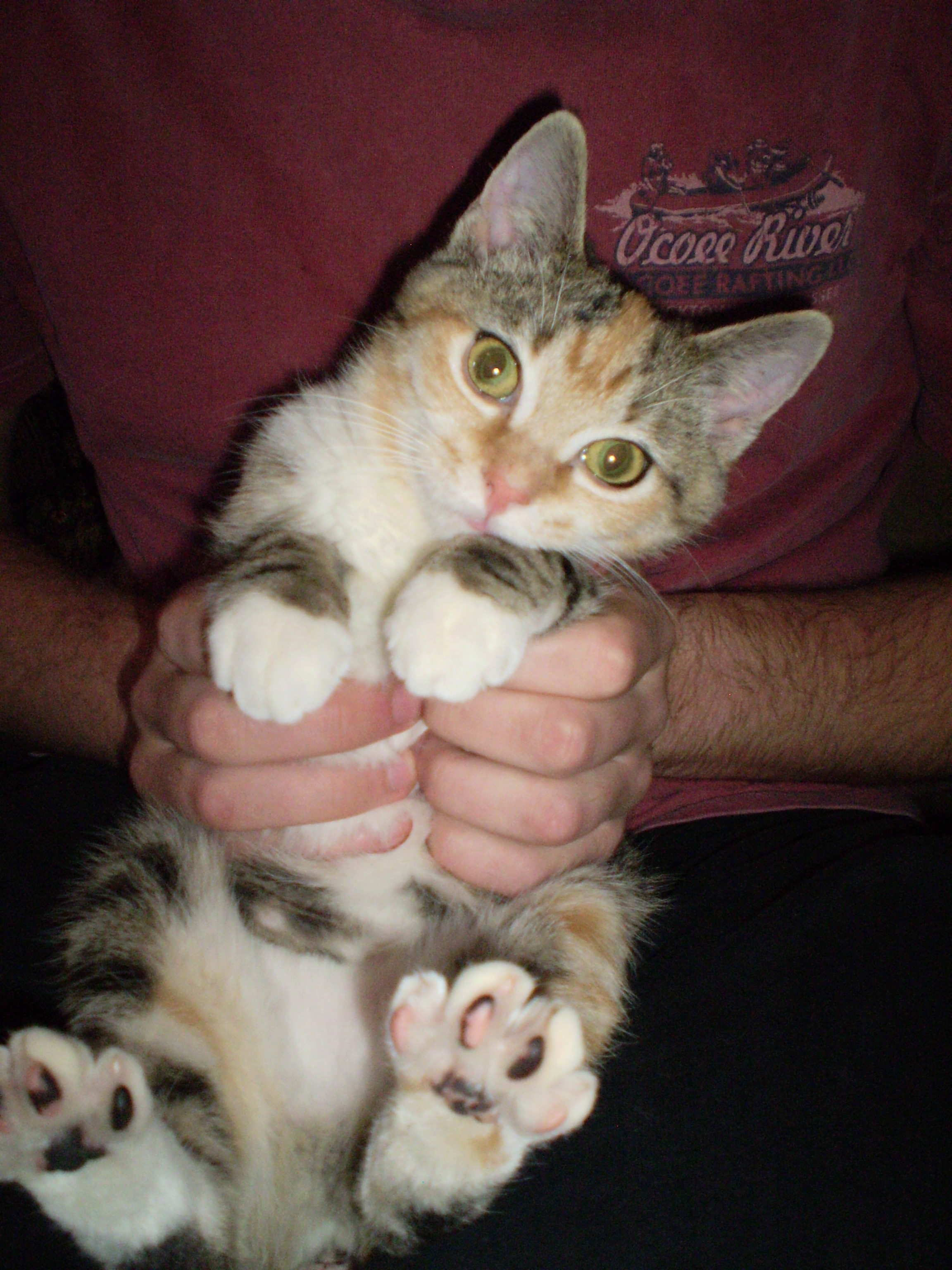 Cat Therapy Why Pets Are Good For Your Health Petsafe Articles