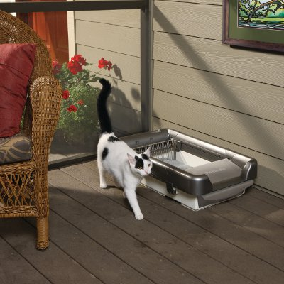 automatic litterboxes prevent toxoplasmosis