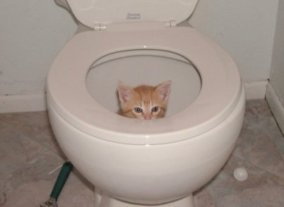 How do you handle your catu0027s litter situation? Do you have any other tips for new pet owners? & 5 Frequently Asked Questions about the Litter Box | PetSafe® Articles Aboutintivar.Com