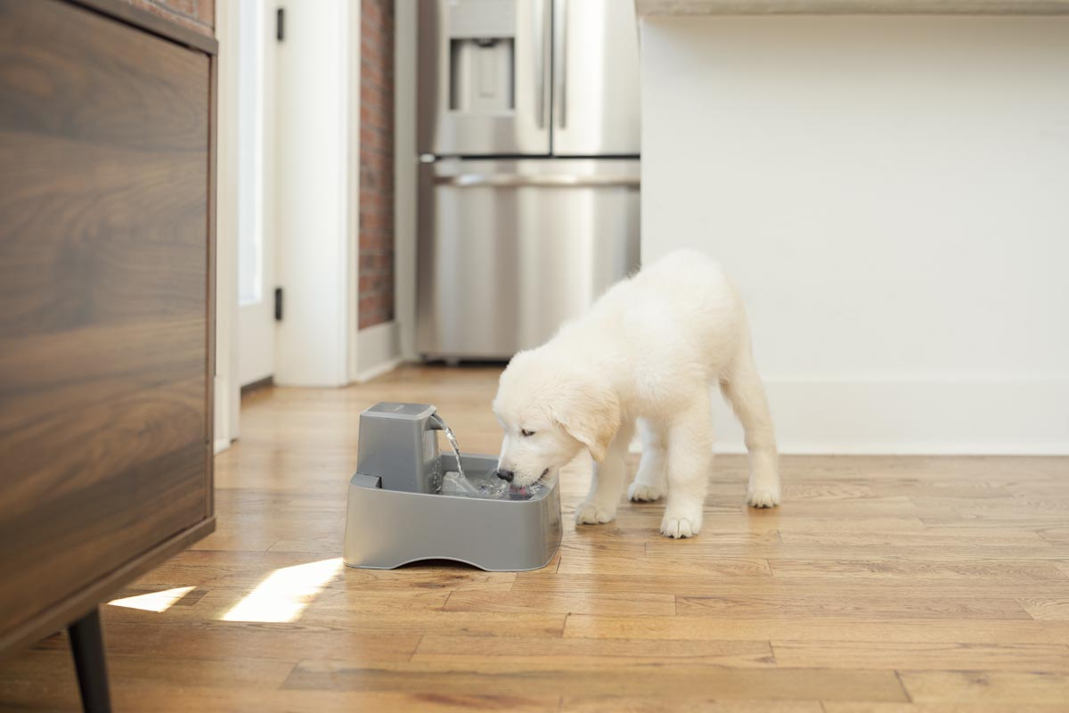 dog and pet water fountain