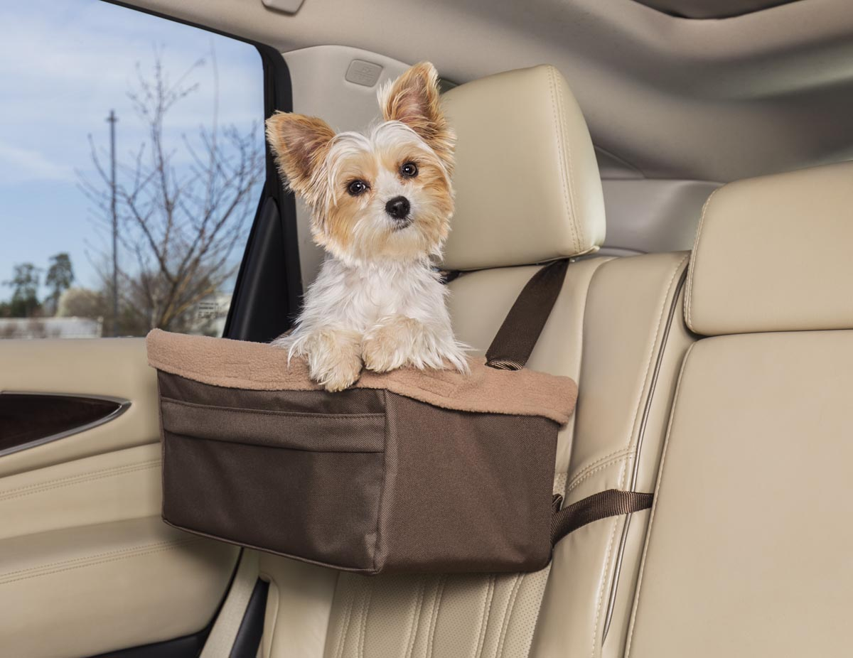dog sitting in car booster seat