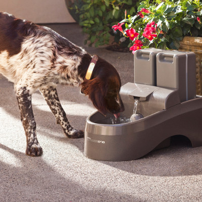 outdoor pet fountain