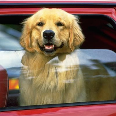 how long can dogs be in parked car