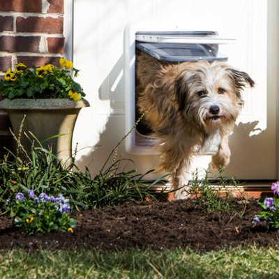 Safety Indoors and Out with Pet Doors & Wireless Containment