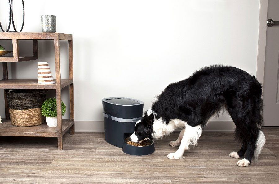 Pet Food: The Good, the Bad, and the Healthy | PetSafe® Articles