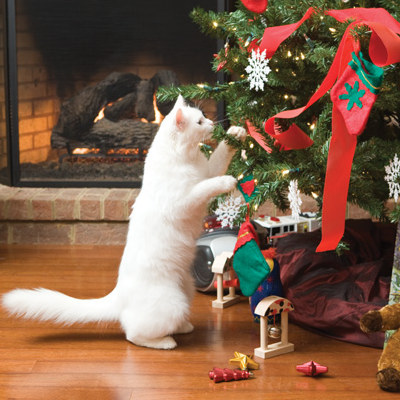 holiday pet proofing