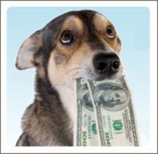pet cost, save money