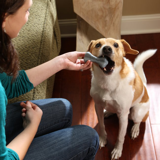 dental treats keep dogs healthy