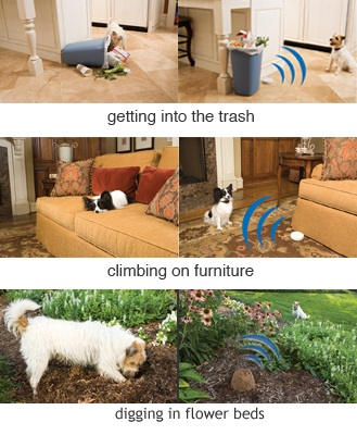 pet proofing options