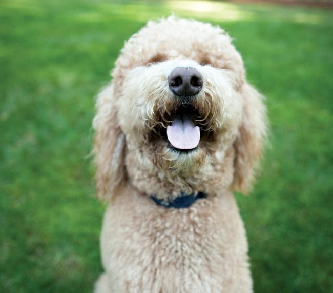 10 Ways to Help Homeless Pets | PetSafe® Articles