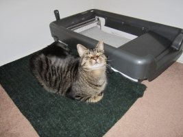 sweepone litter box