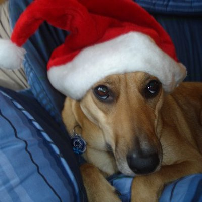 pet holiday tips