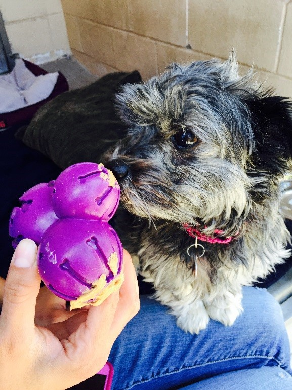Fun Toy Dogs : Fun toys for bored dogs petsafe articles