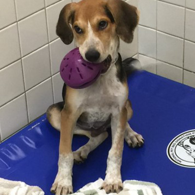 toys for shelter dogs