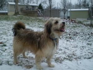 Diy dog grooming basics petsafe articles dog grooming solutioingenieria Image collections