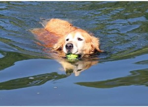 dog swimming safety