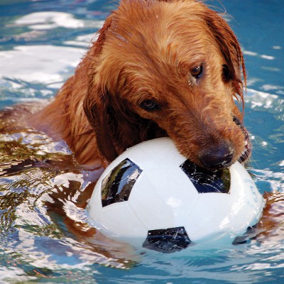 help your dog cool off