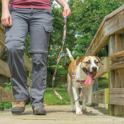 The 6 Ways an Easy Walk Harness® Can Make Walks Easier
