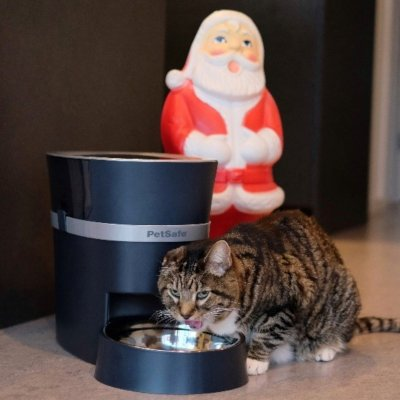 The 9 best cat gifts for your pretty kitty this Christmas