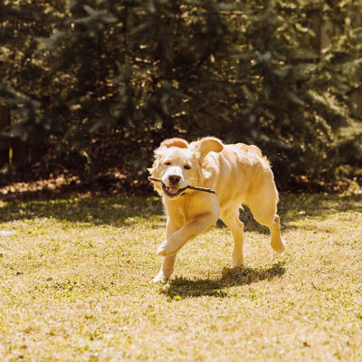 Are summer pests pestering your pets?