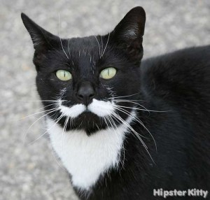black kitty with moustache