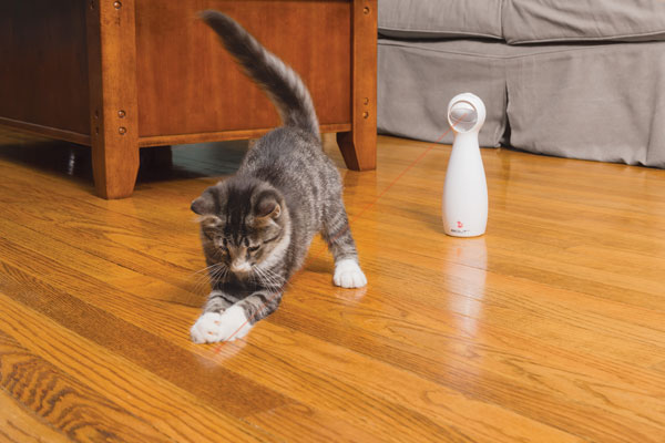 Just Why Does Your Cat Love To Chase The Light From A Laser Toy Around Your  House? Attribute The Appeal To A Laser Light Toyu0027s Ability To Mimic The  Movement ...